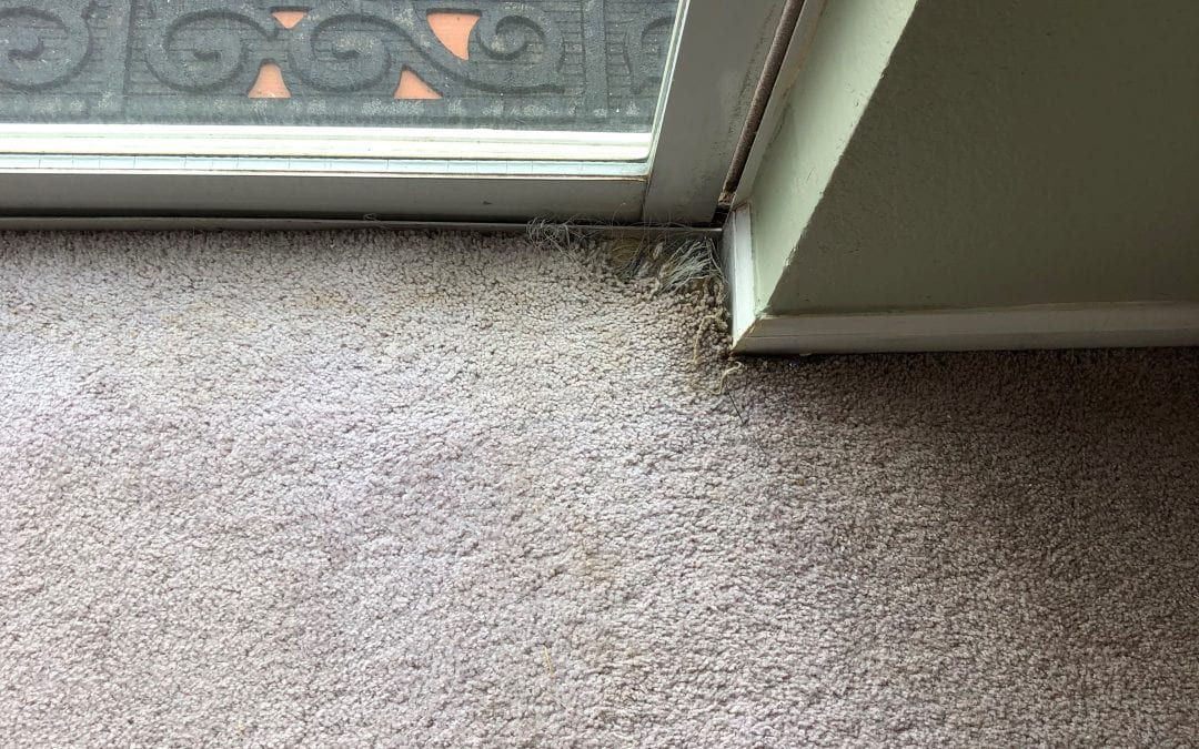 Flagstaff, AZ: Carpet Repair
