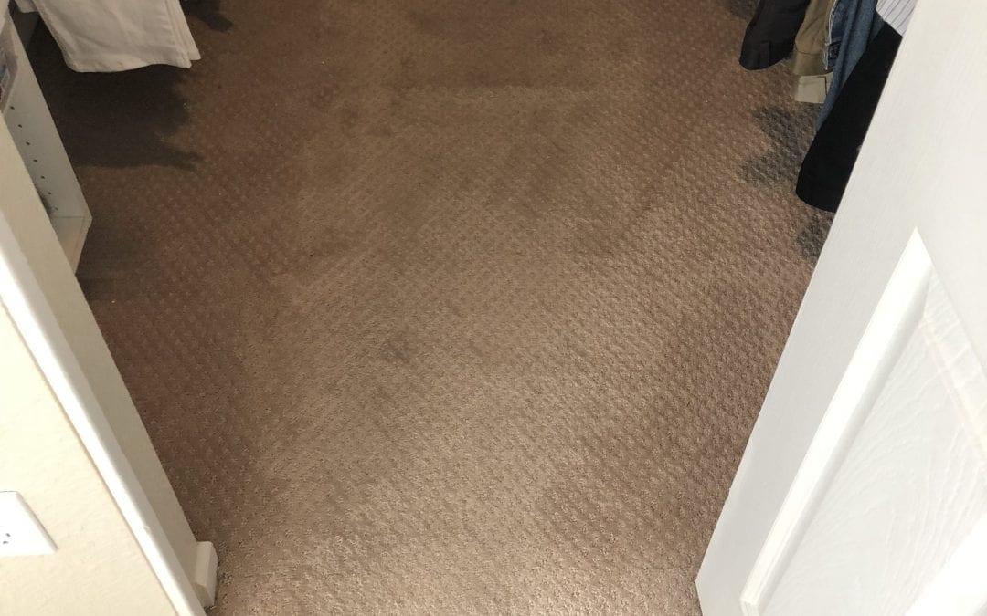 Flagstaff, AZ: Carpet Cleaning
